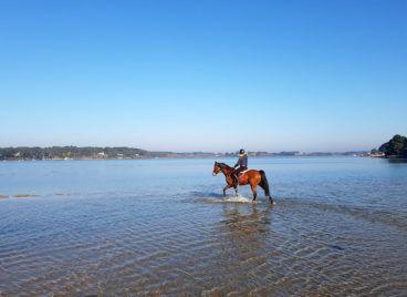 Balade à cheval à Baden