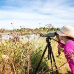 Observez les oiseaux du Golfe du Morbihan © Simon Bourcier