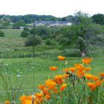 Vue de la terrasse sur la nature fleurie
