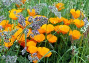 Nature fleurie en mai