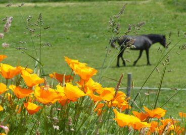 Nature fleurie aux Hauts de Toulvern