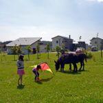Enfants jouant devant les chevaux et les ânes