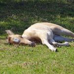 Heidi fait la sieste