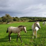 Les chevaux aux Hauts de Toulvern
